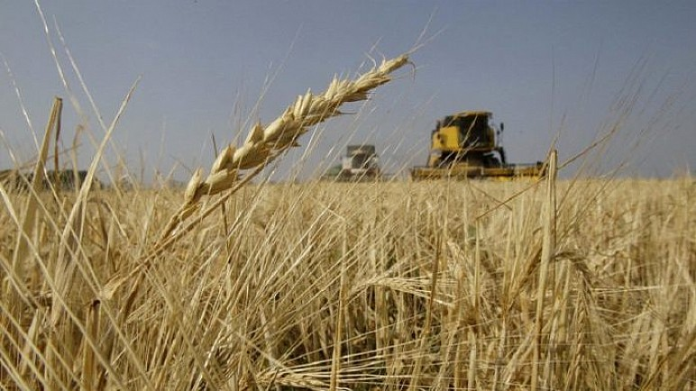 مزارعون في بادية المثنى يطالبون بفتح مراكز لتسويق محصول الشعير