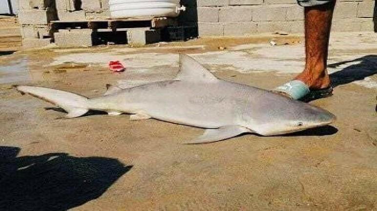 """بالصور.. صياد بصري يطيح بـ """"سمكة قرش"""" في شط العرب"""